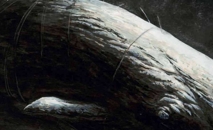 Moby Dick HC Review